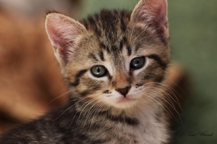 Katt_11
