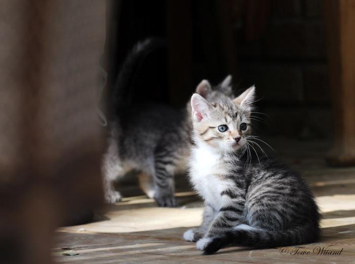 Katt_2