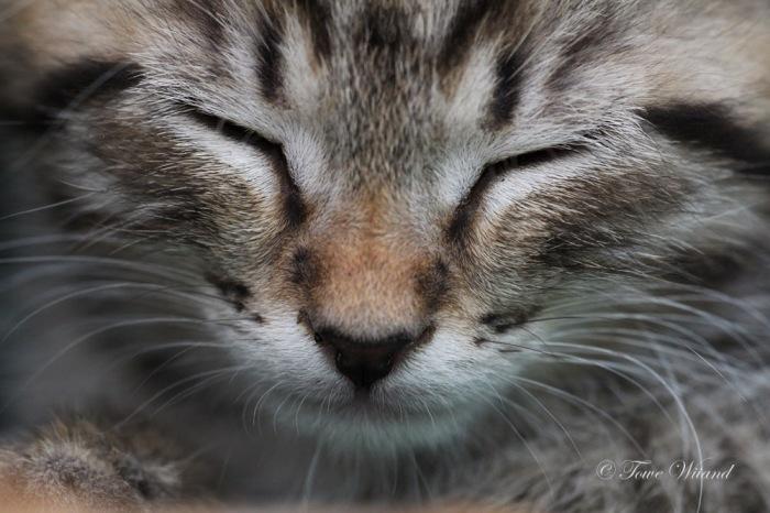 Katt_20