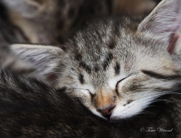 Katt_21