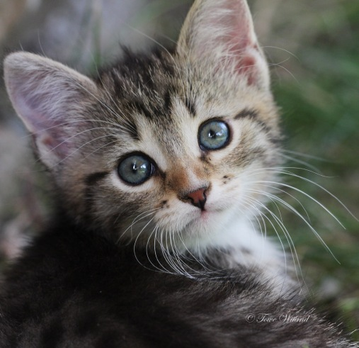 Katt_3