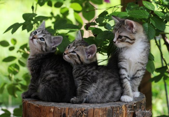 Katt_4