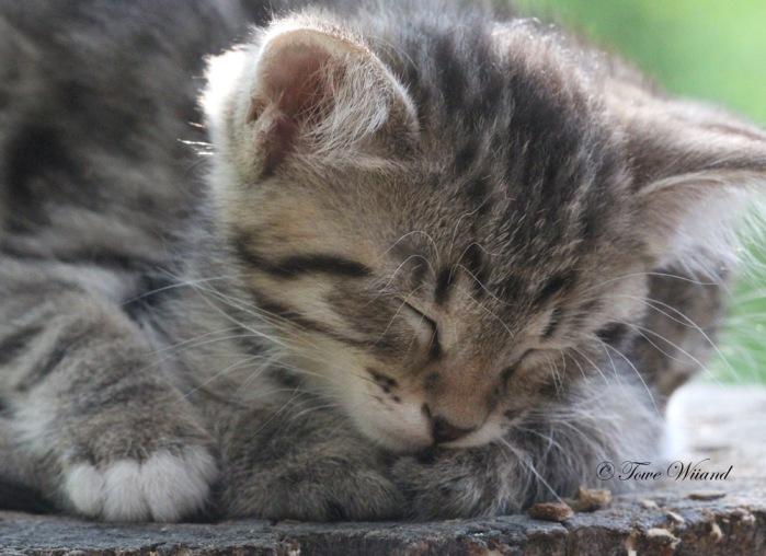Katt_6