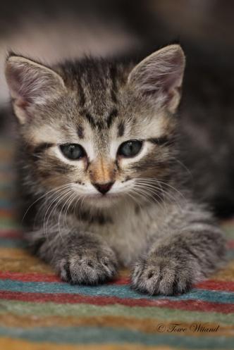 Katt_9